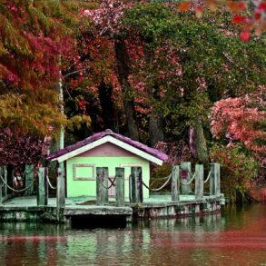 Atatürk Arboretumu İstanbul